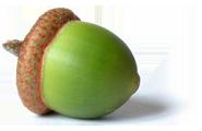 Желудь PNG фото