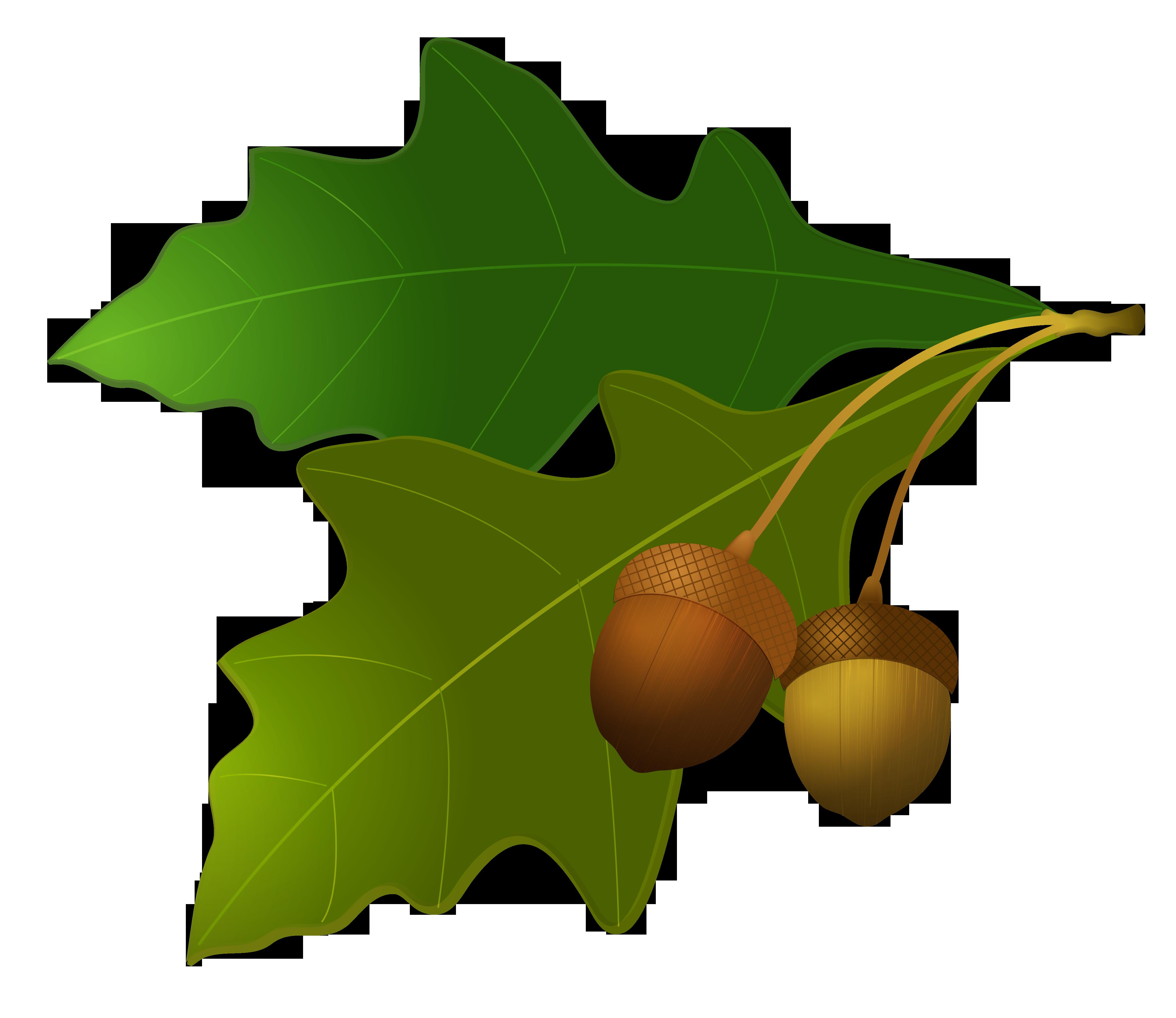 Желудь PNG