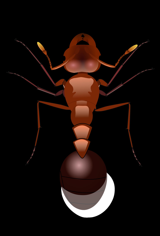 муравьи PNG