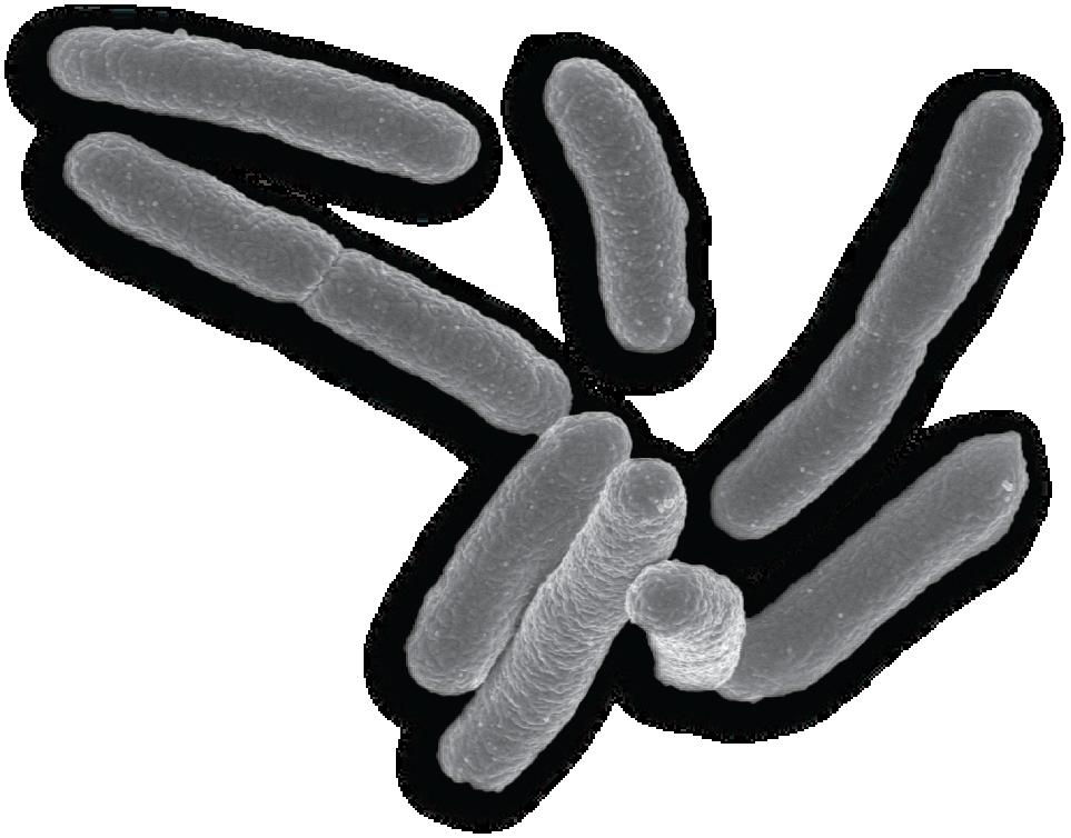 Бактерия PNG