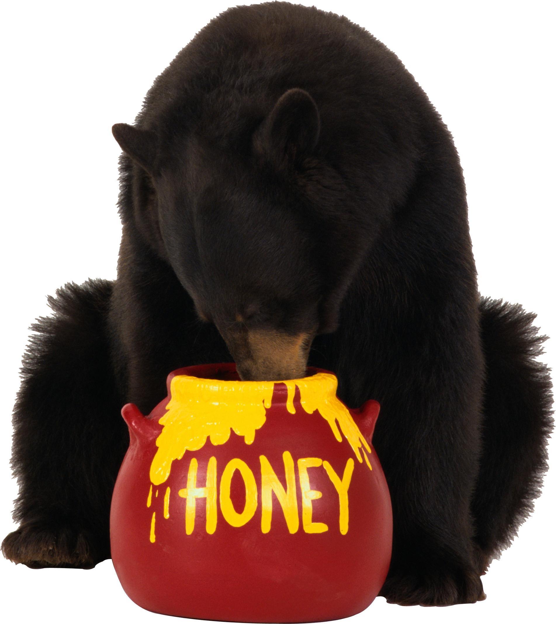 bear_PNG1183.png?i=1