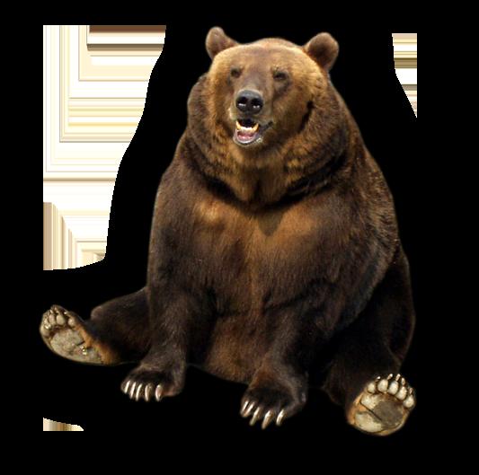 медведь PNG