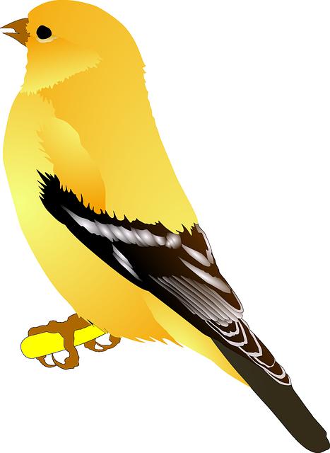 Птица PNG