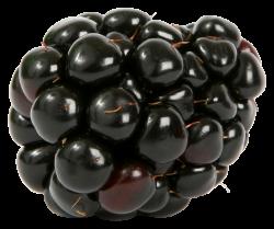 Blackberry PNG