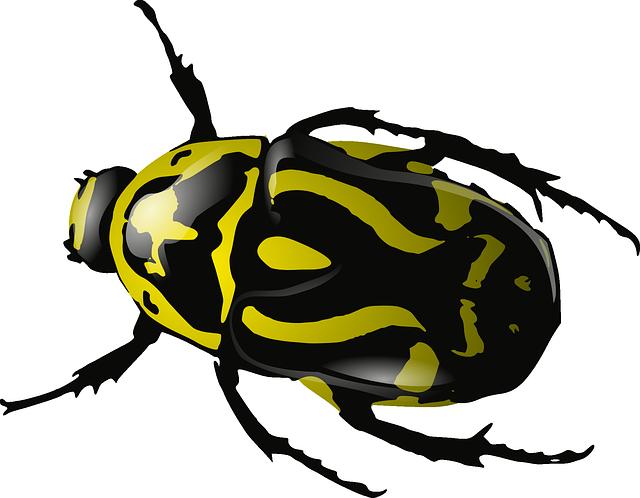Желтый жук PNG фото