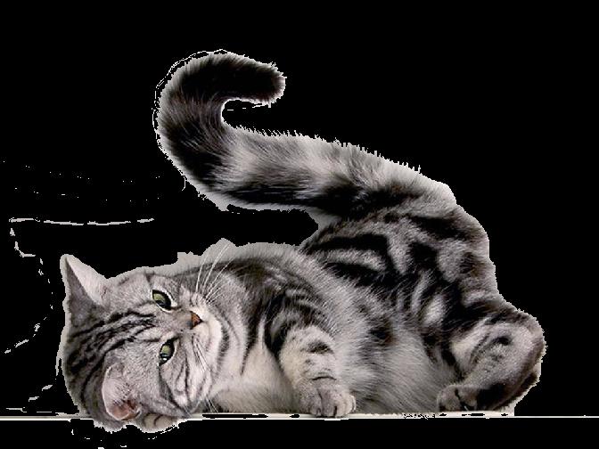 Кошка PNG фото, котенок изображение PNG