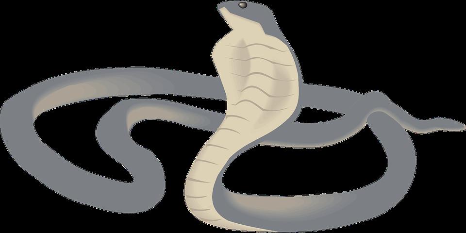 Cobra PNG images