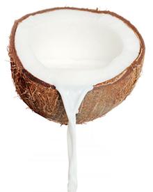 Кокос PNG фото