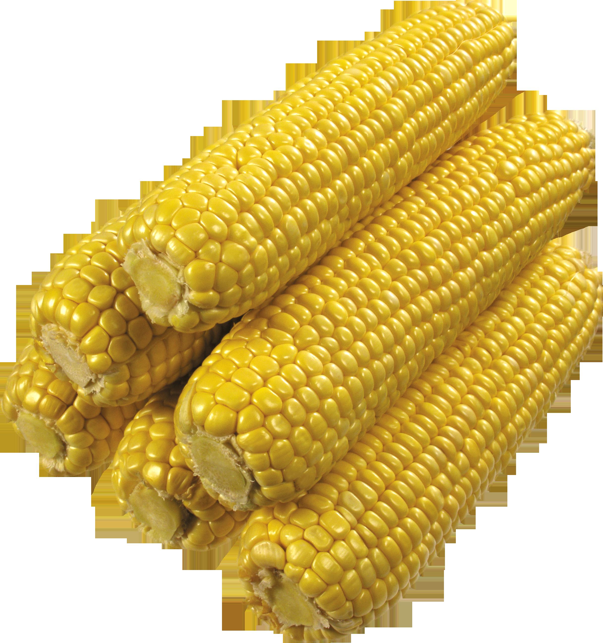 Вареная кукуруза PNG фото