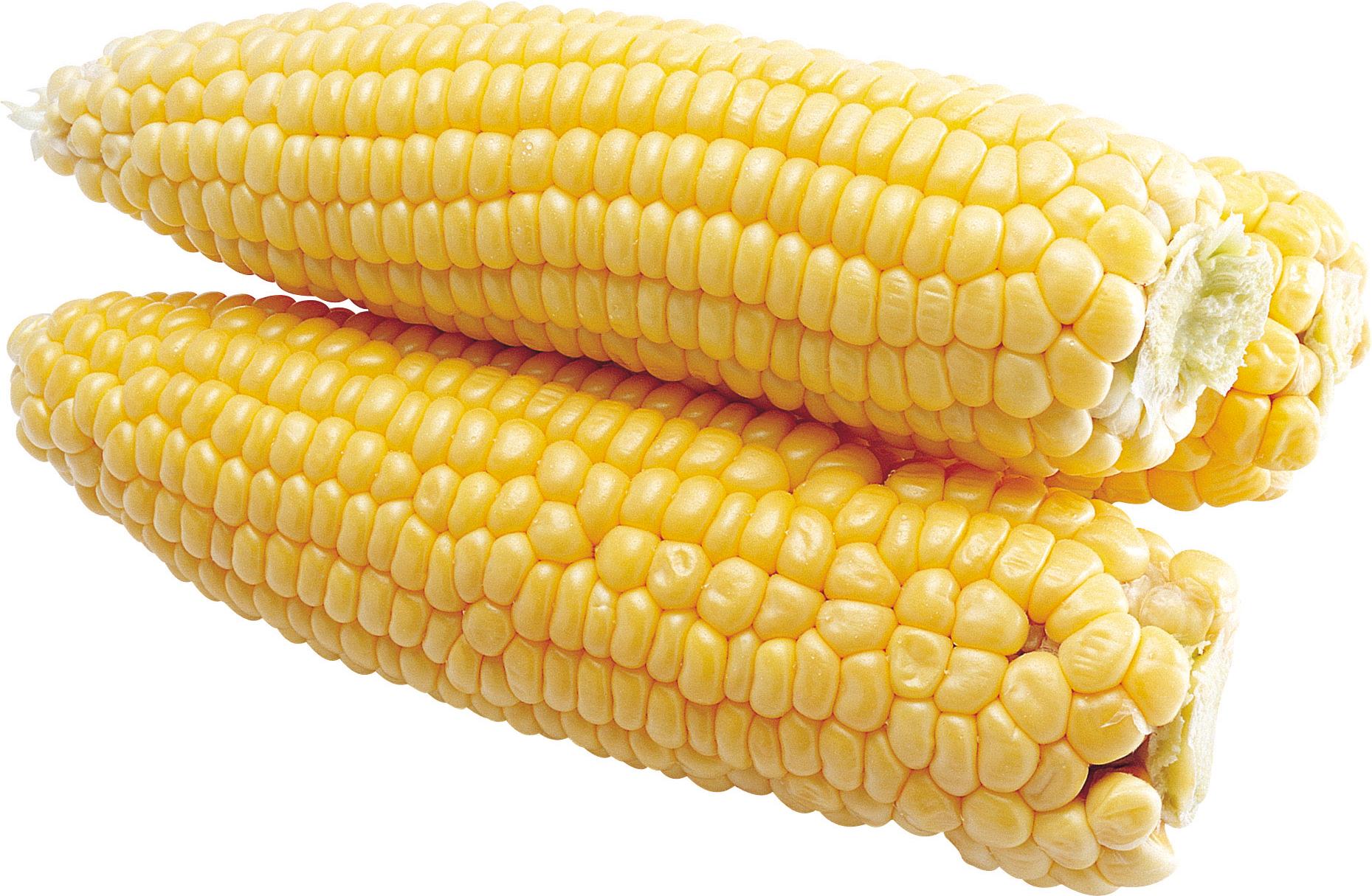 Желтая кукуруза PNG фото