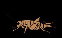 Сверчок PNG