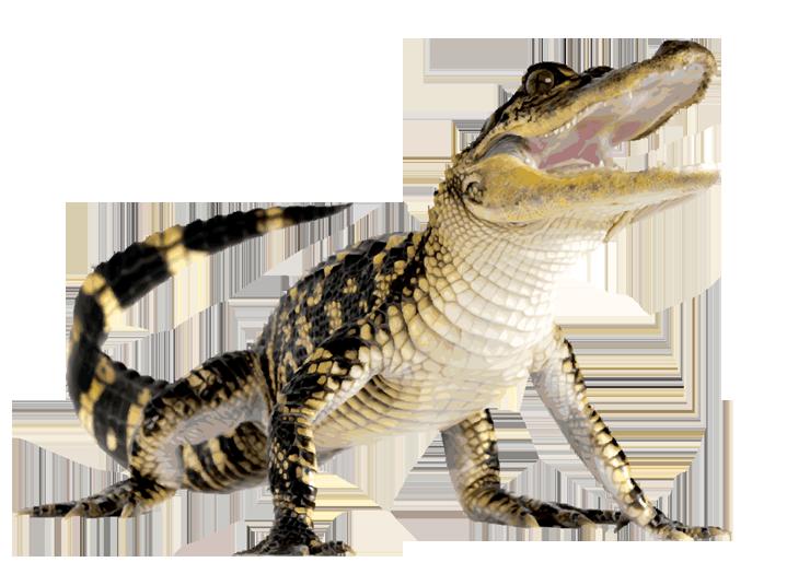 Аллигатор PNG