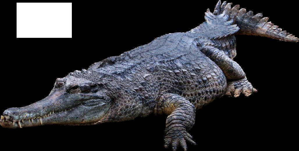 Крокодил PNG