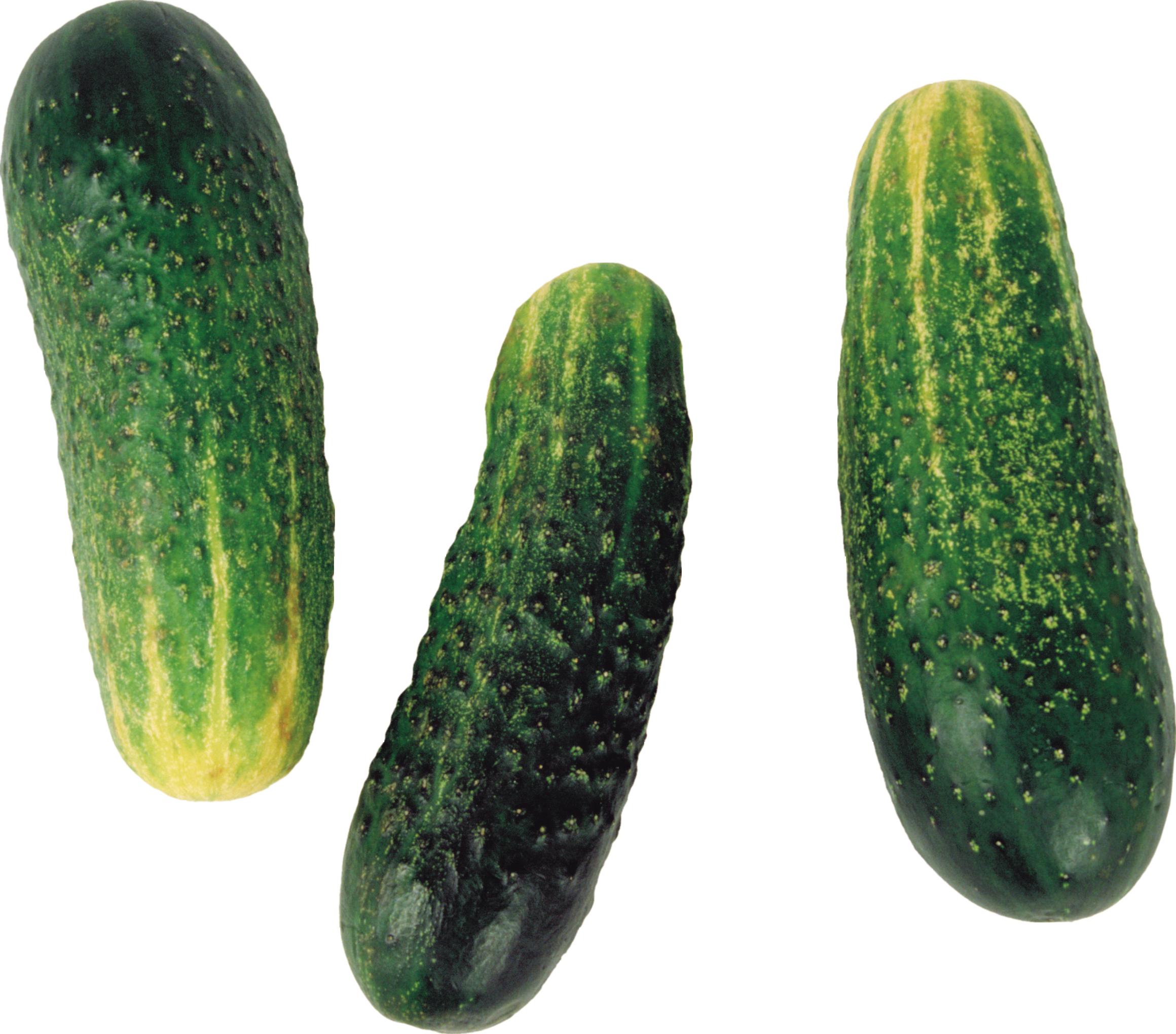 Огурцы PNG