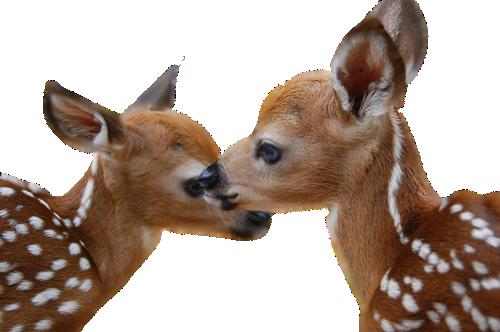 Deer PNG image