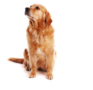 собака PNG фото