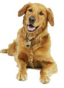 dog PNG image