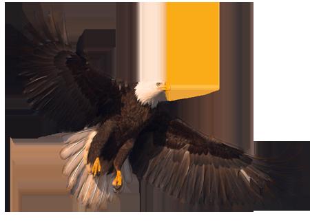 Орел PNG фото