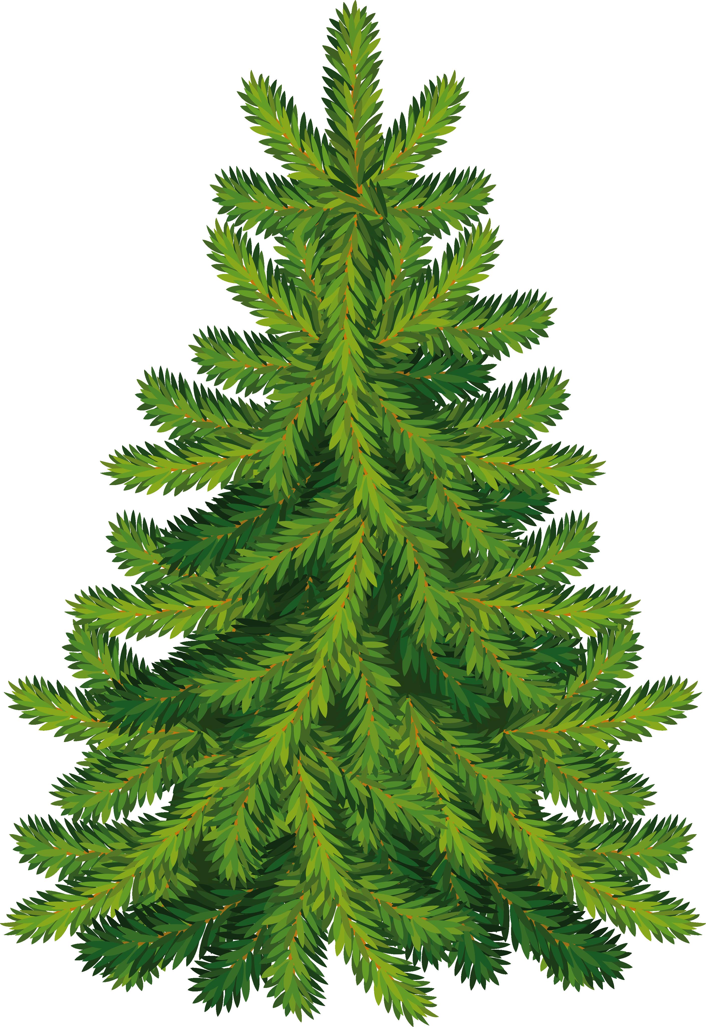 Fir-tree PNG image