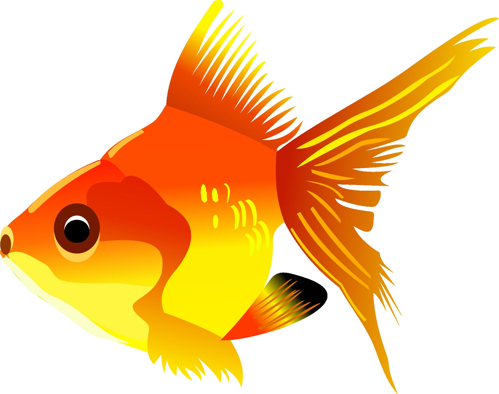 gold fish PNG image