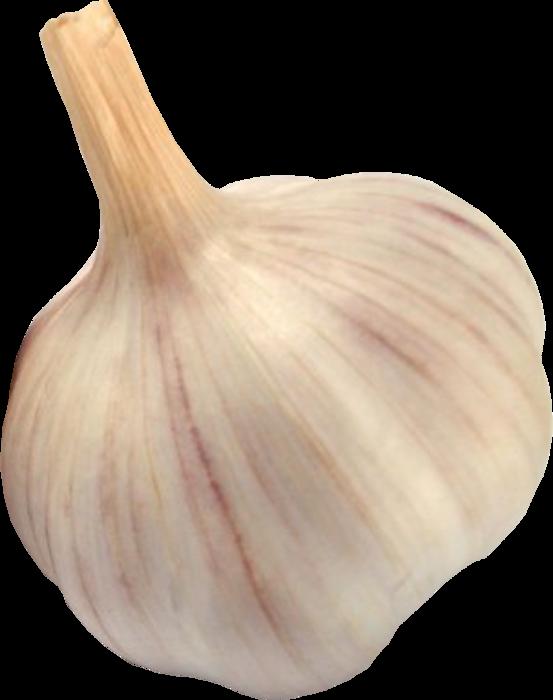Чеснок PNG