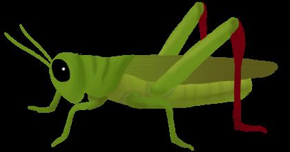 Кузнечик PNG
