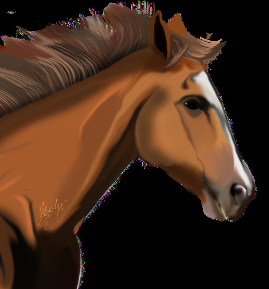 Голова лошади PNG фото