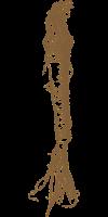 Хрен PNG