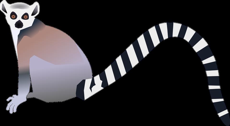 Лемур PNG