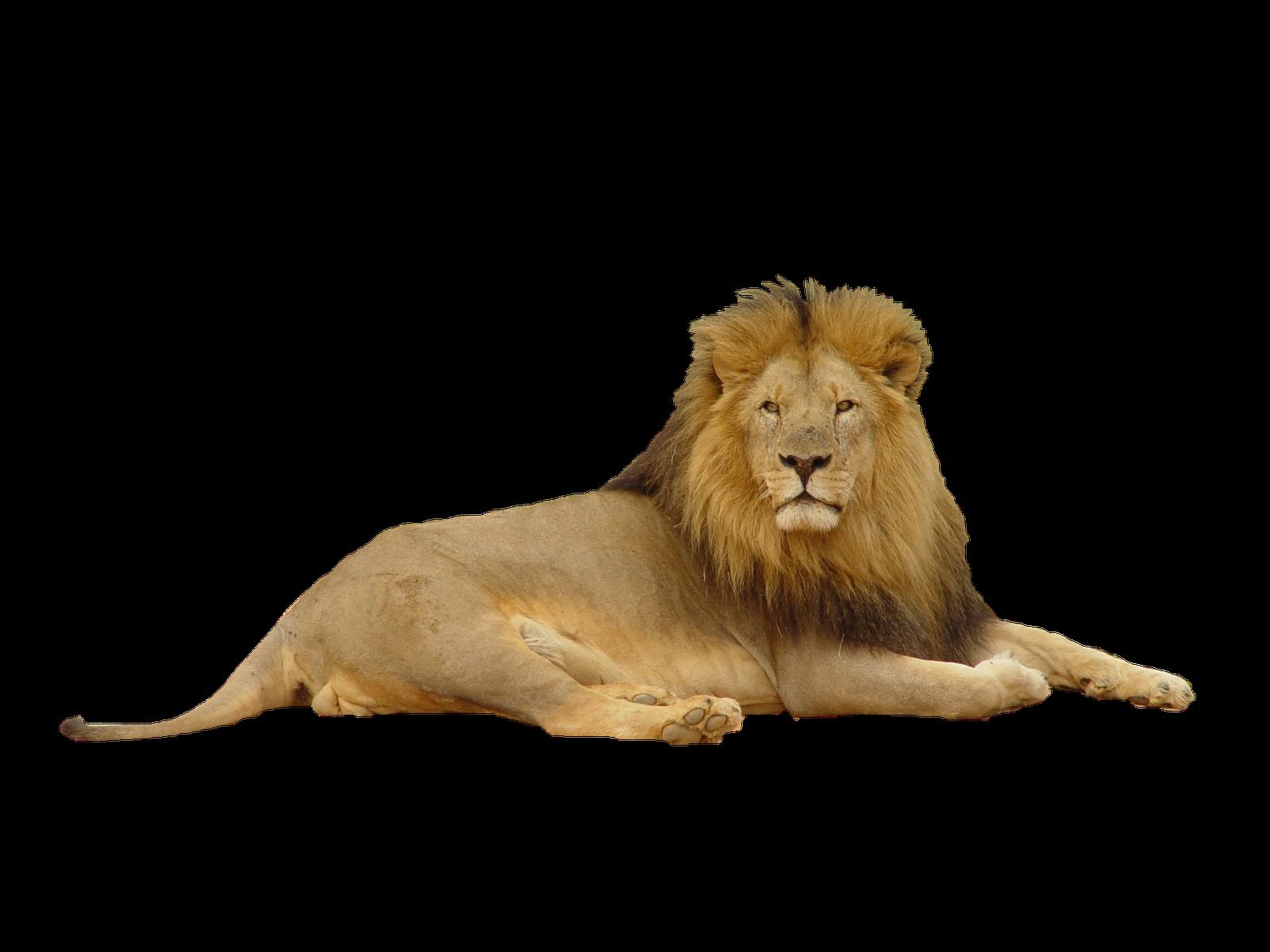 Roaring Lion Png | www.pixshark.com - Images Galleries ...