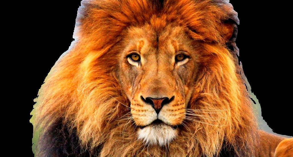 Lion Images Png - impremedia.net