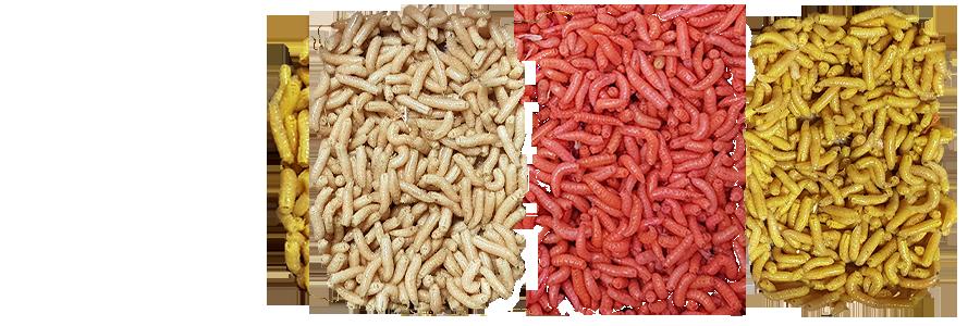 Maggots PNG