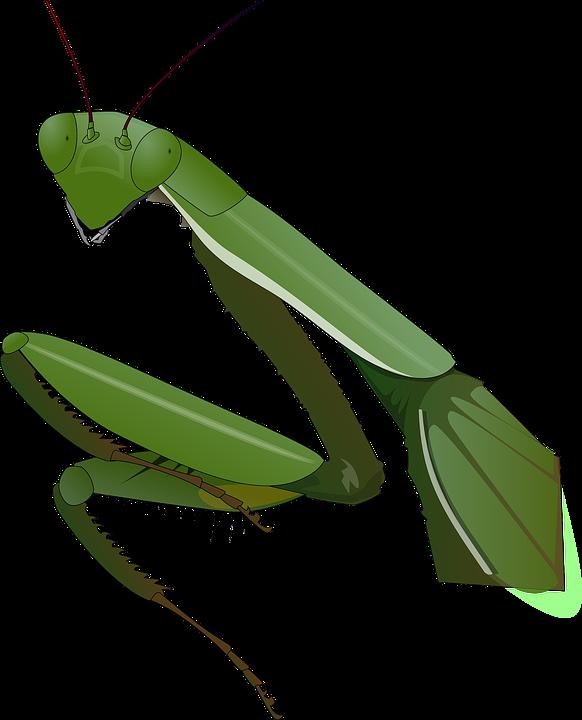 Богомол PNG