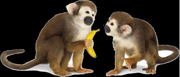 Monkey Web Design