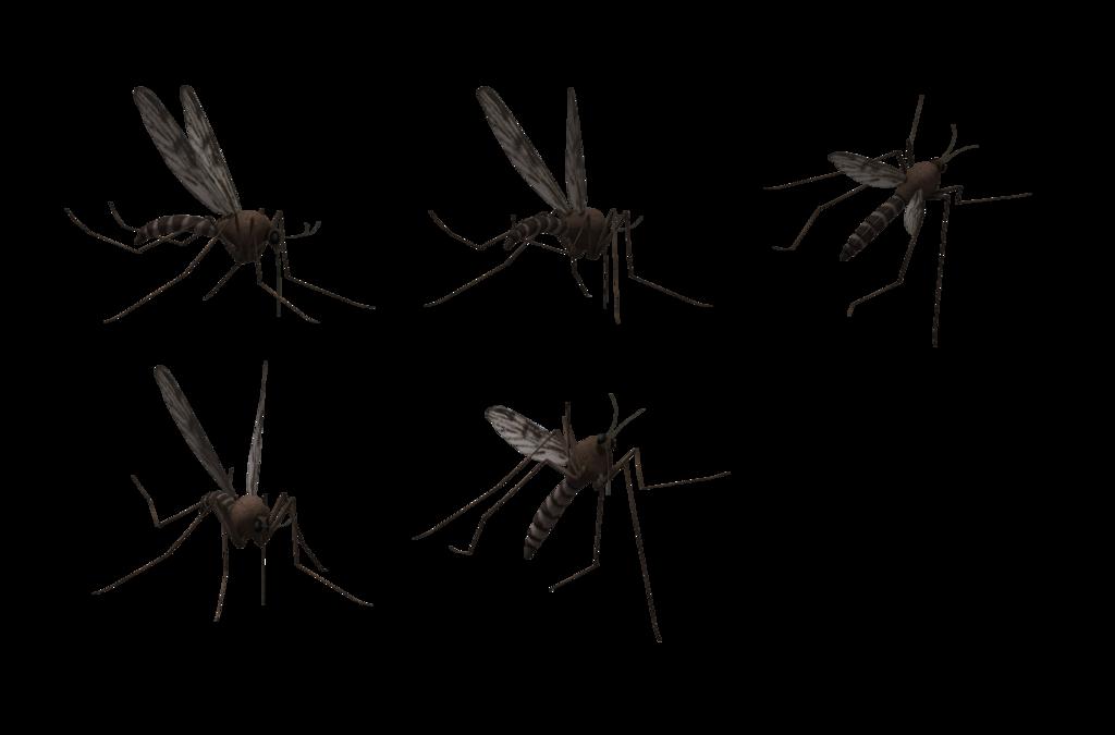 Комары PNG