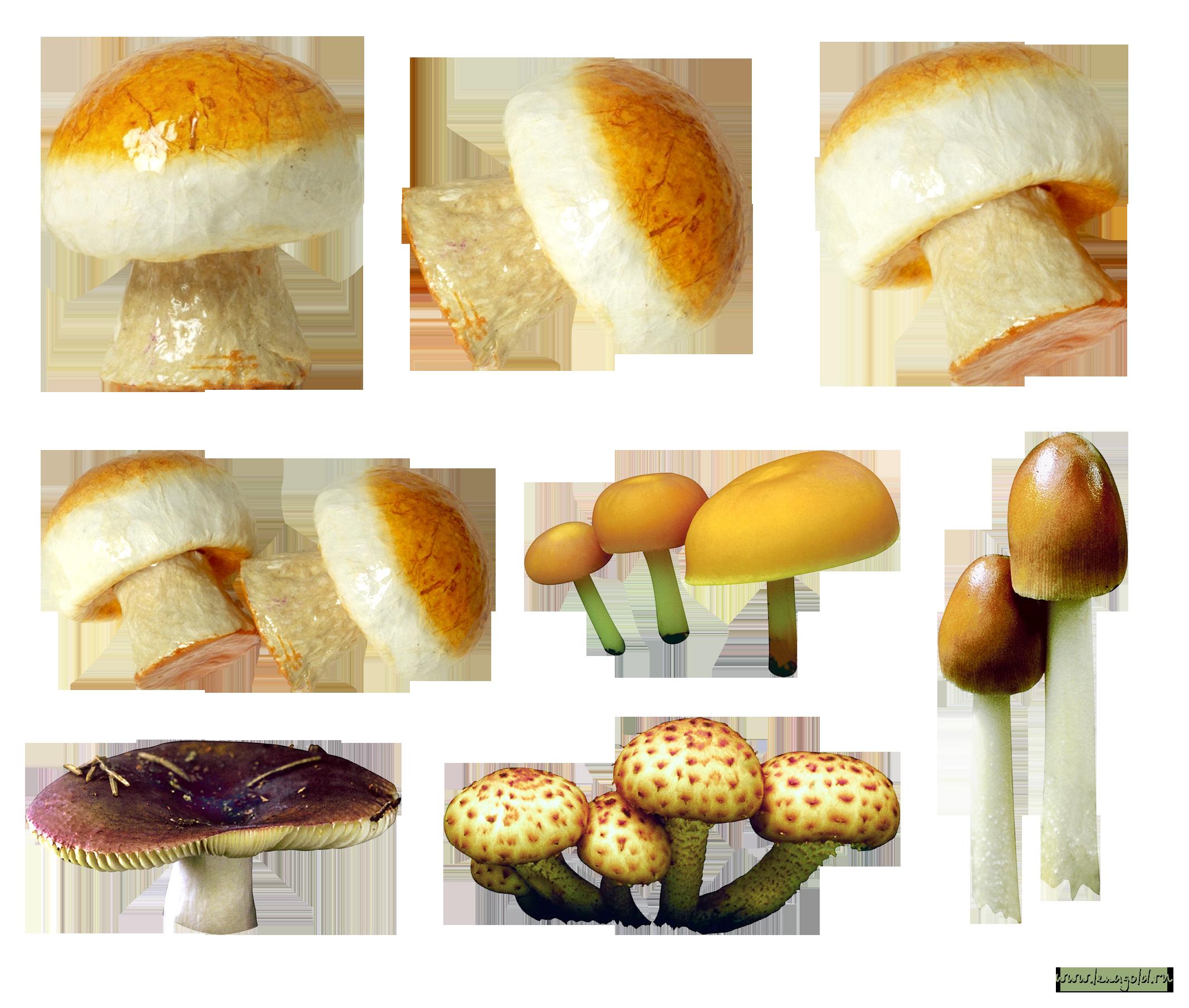 Mushroom PNG image