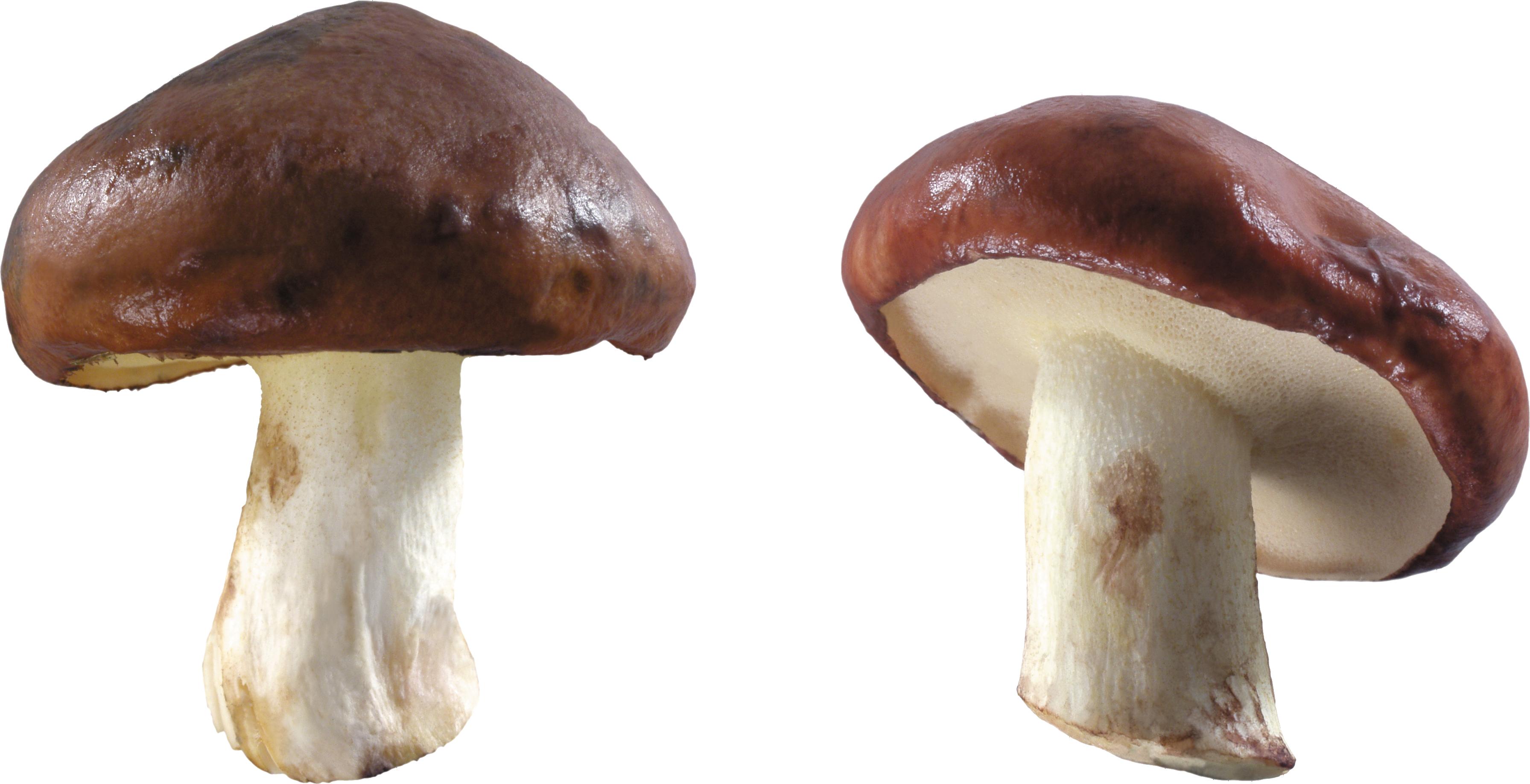 грибы PNG фото