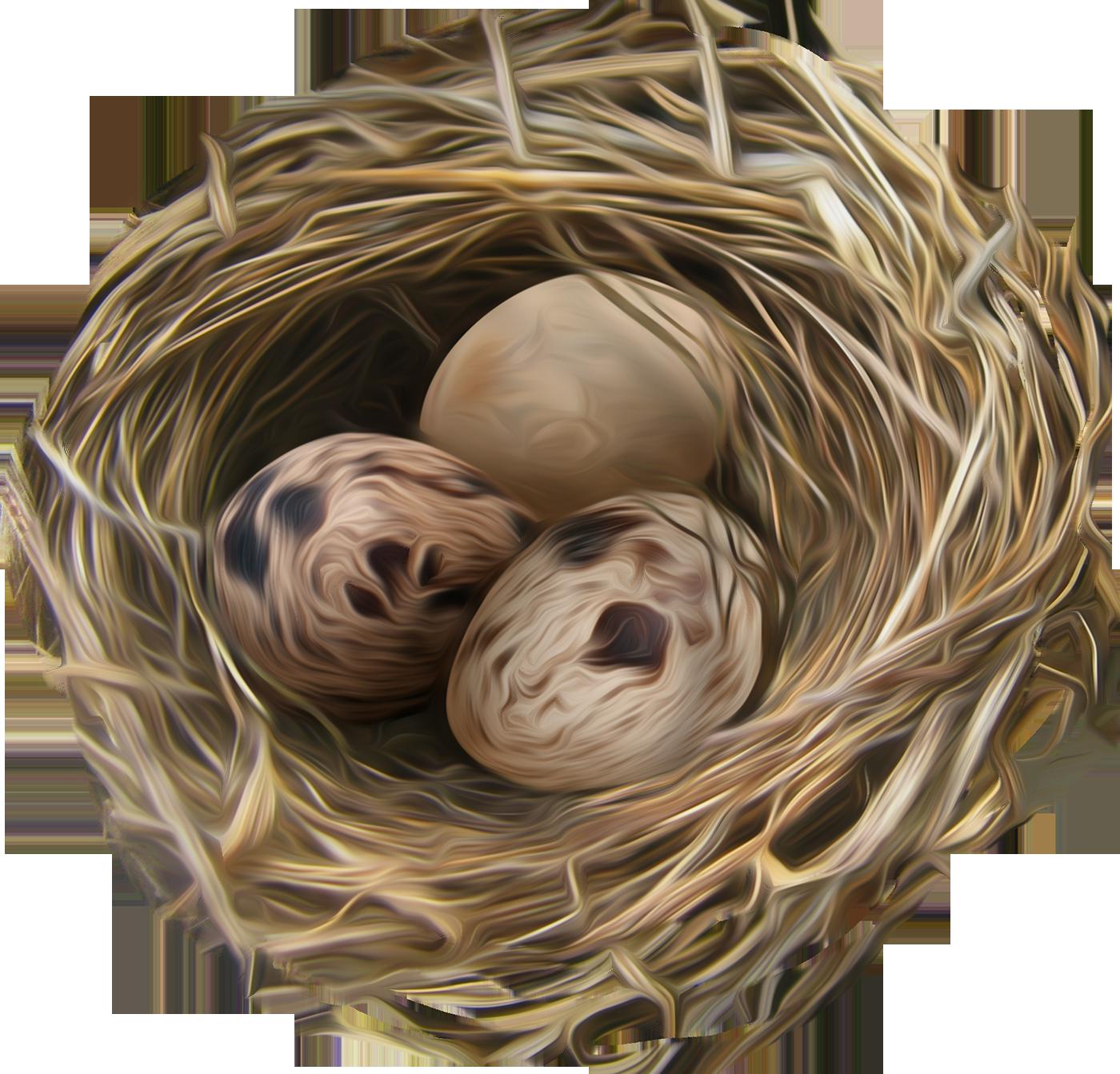 Гнездо PNG