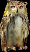 Сова PNG