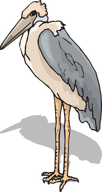 Пеликан PNG