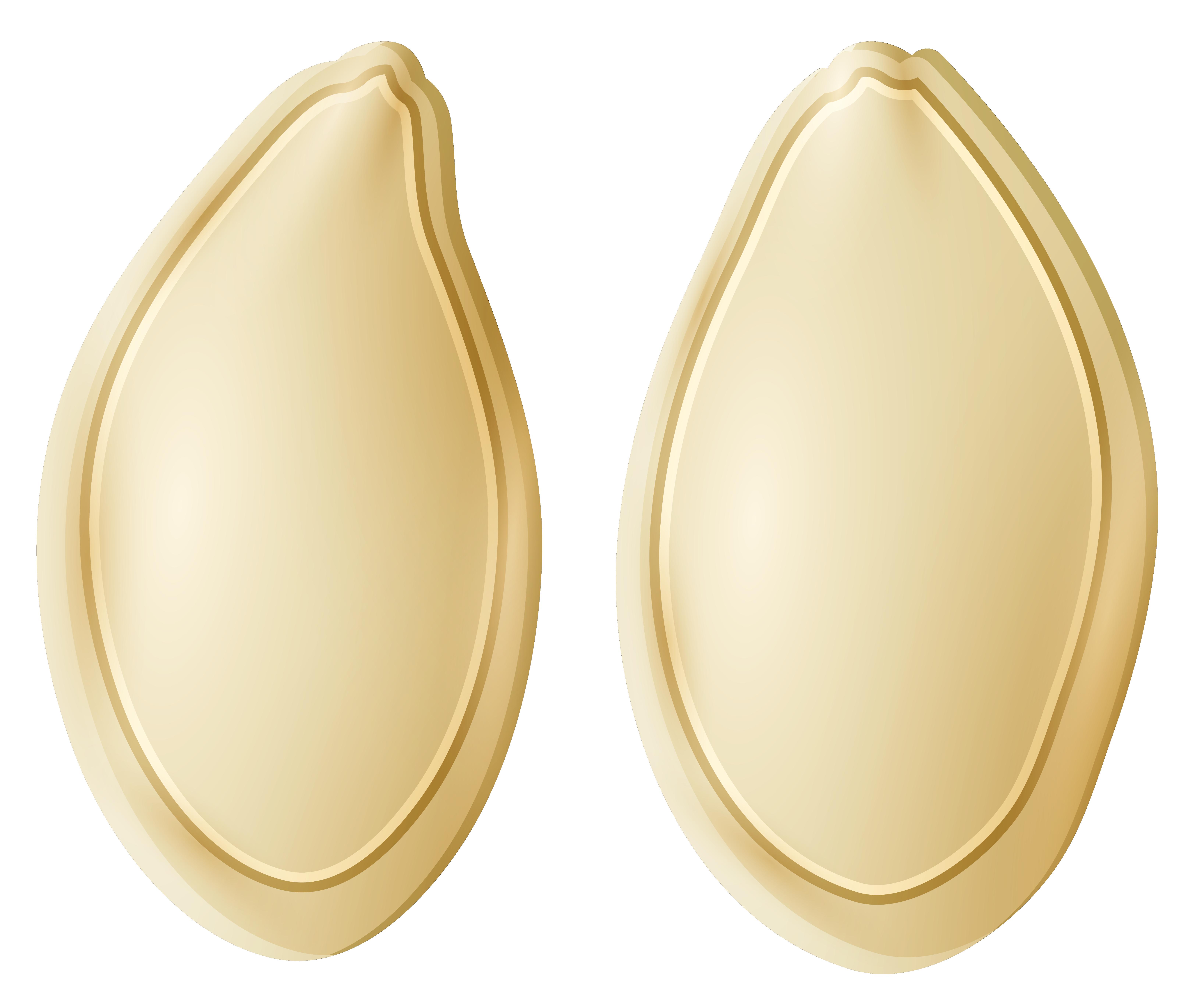 Семя, семена тыквы PNG
