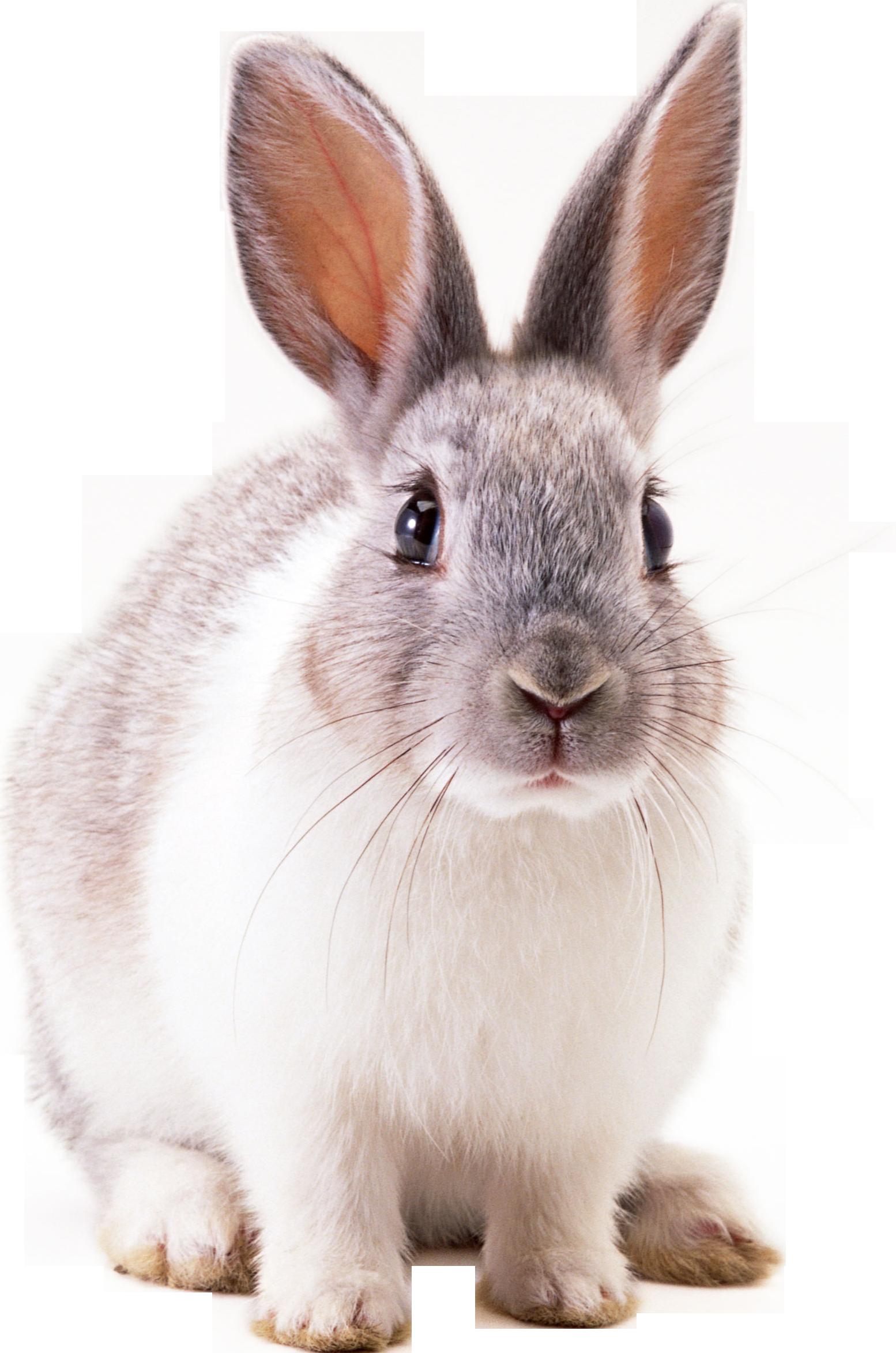 кролик PNG фото