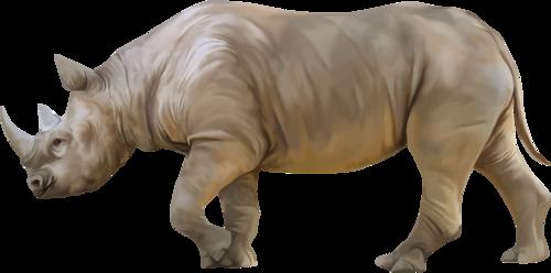 Rhino PNG