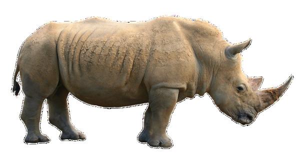 Giochi di rinoceronti