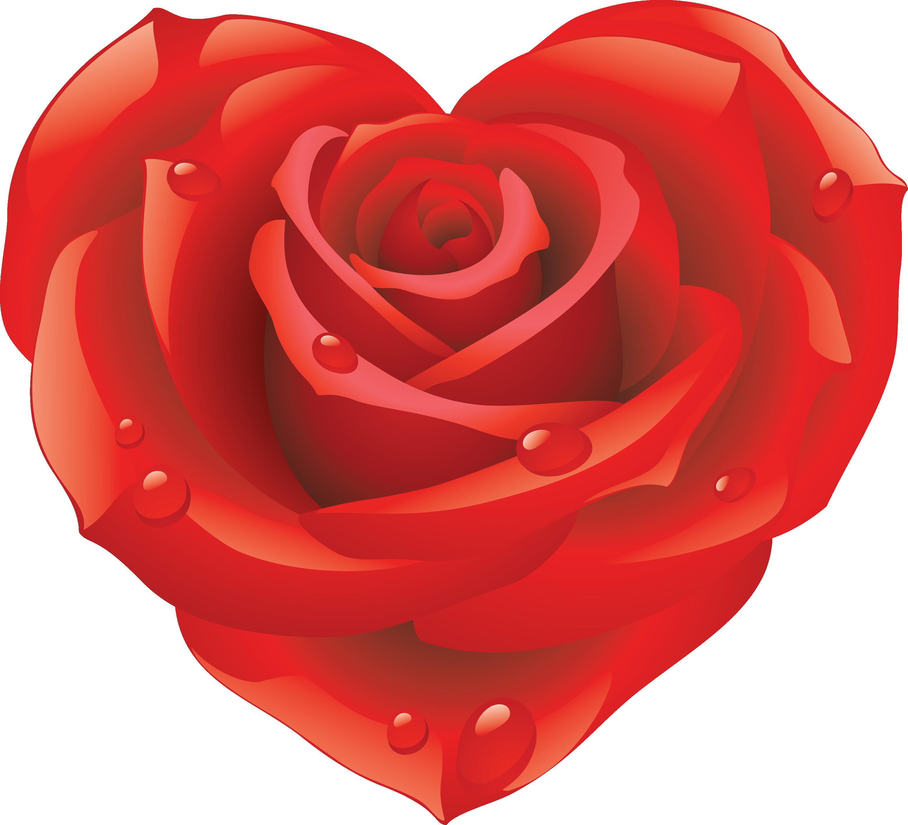 Роза PNG фото