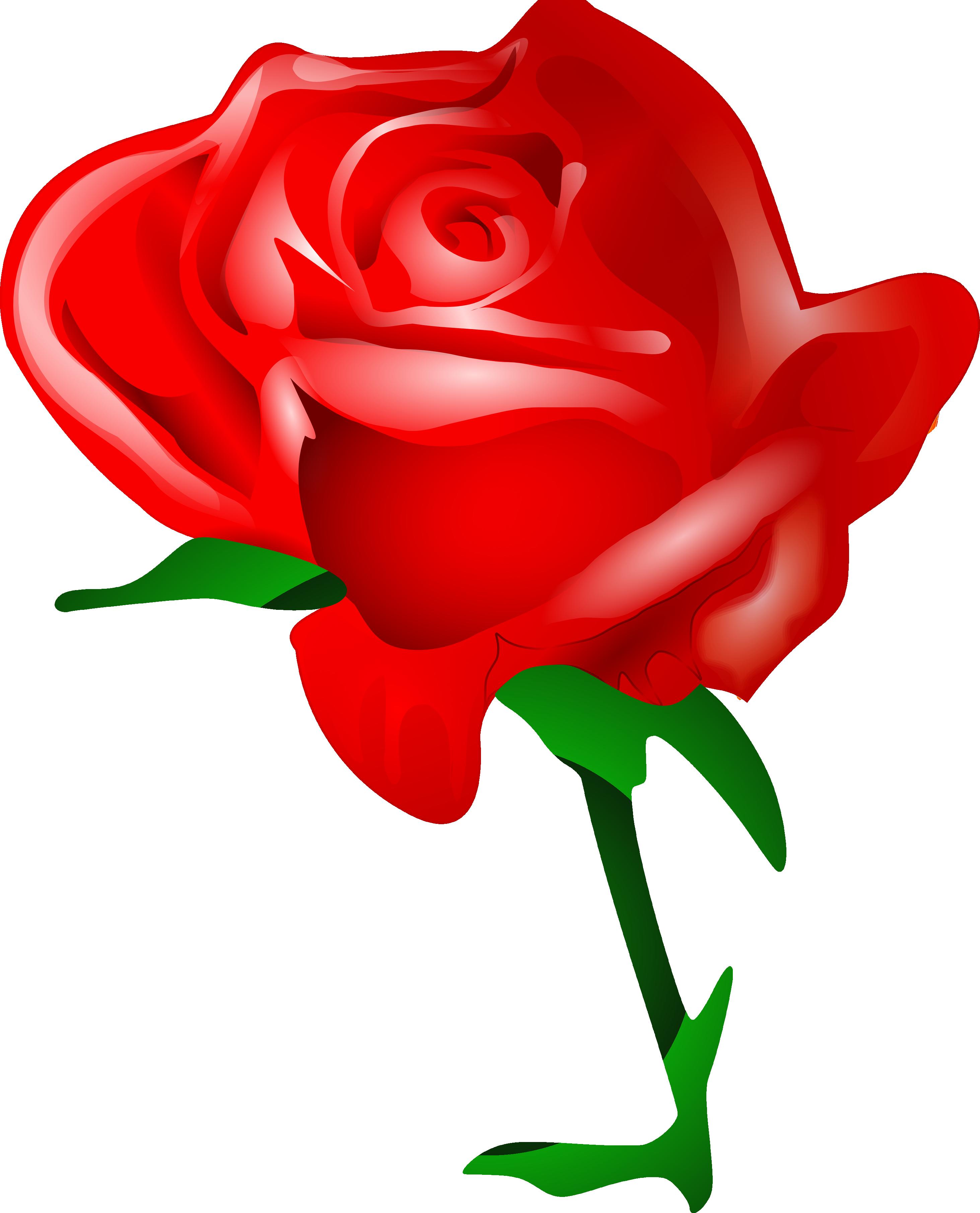 Rose PNG flower images, free download