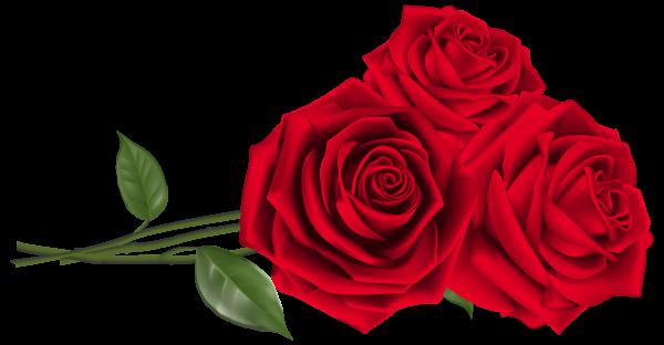 Rose Png Flower Images Free Download