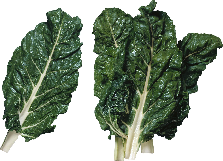 Зеленый салат PNG фото