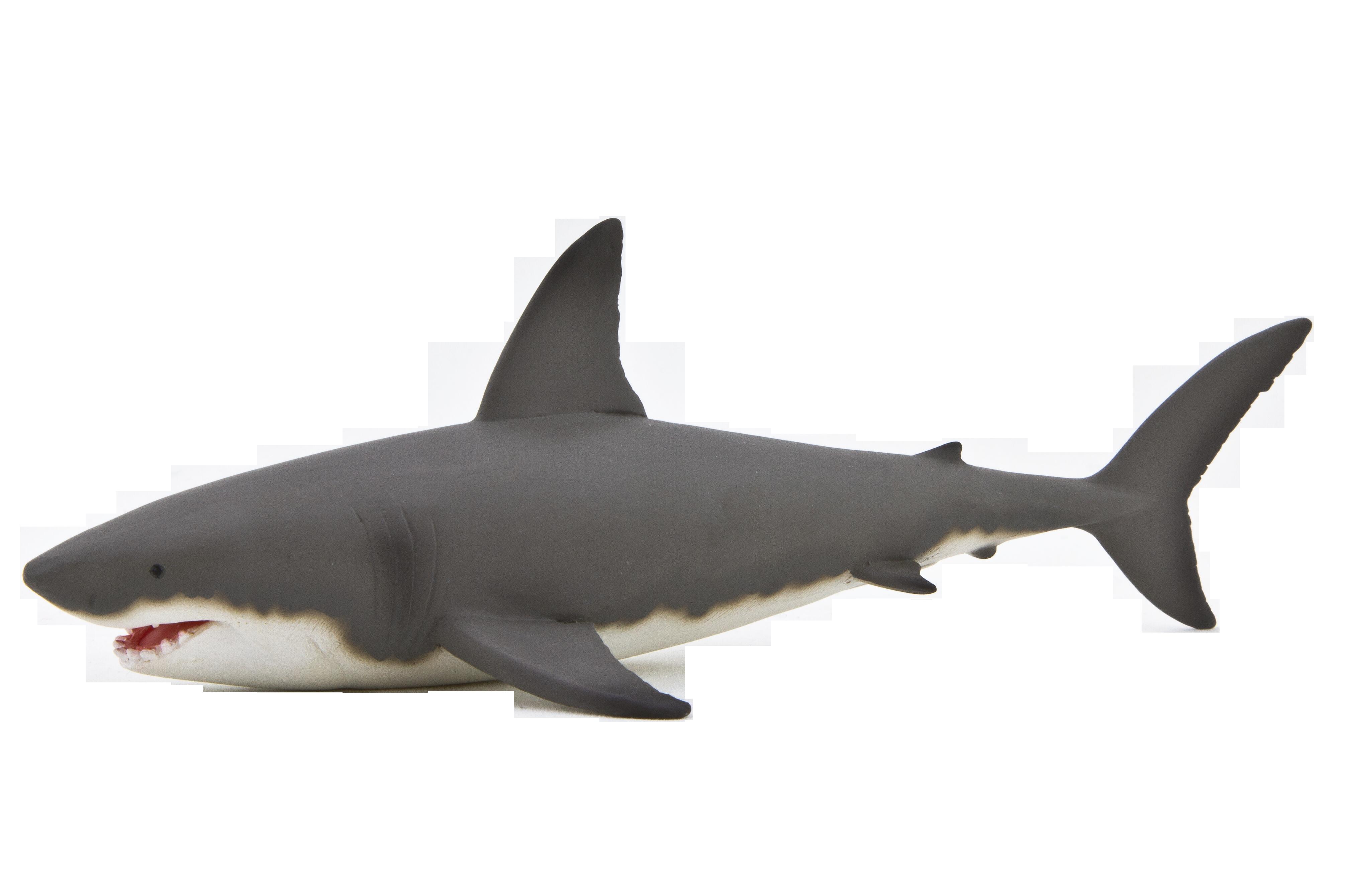 Акула PNG