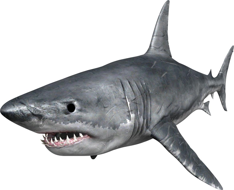 shark png shark clip art printable free shark clip art